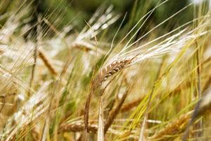 Pflanzenproduktion Arbeitskräfte Agrargenossenschaft Liebenau eG