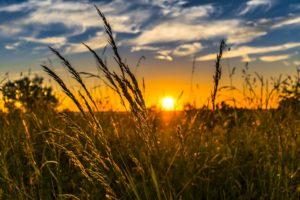 Bodenbedingungen Agrargenossenschaft Liebenau